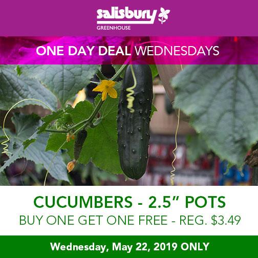 """cucumbers 2.5"""" pots BOGO"""