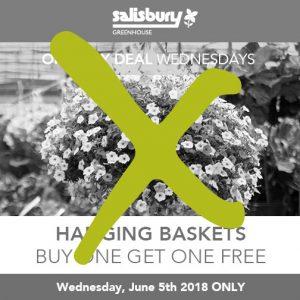 hanging baskets BOGO finished