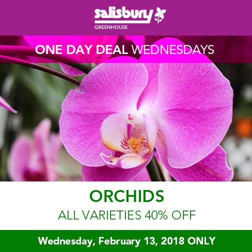 orchids all varieties 40% off february