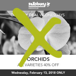orchids all varieties 40% off sale finished