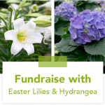 Easter Lily and Hydrangea