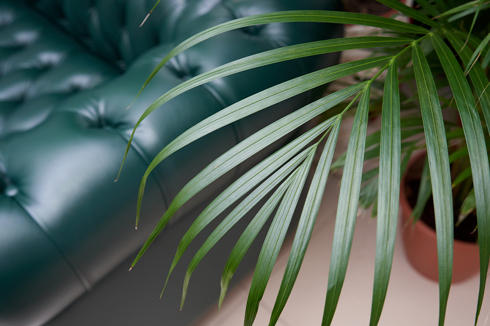 the 3 best tropical palms to cure the winter blues feature