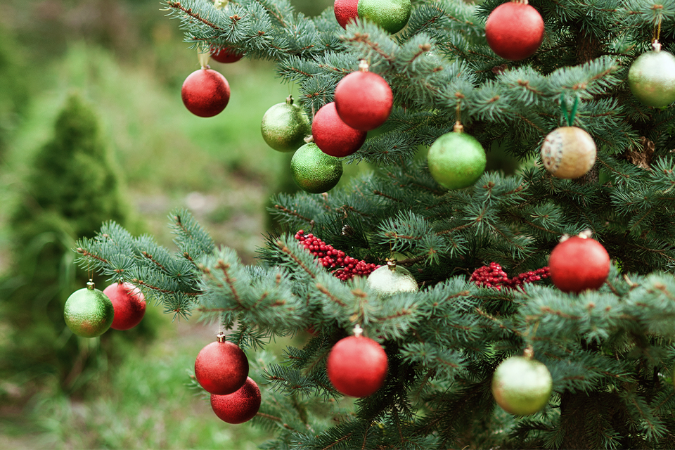 The Legends Behind Popular Christmas Plants feature