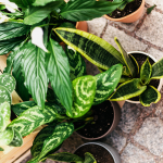 The Ultimate Holiday Gift Guide To Potted Plants