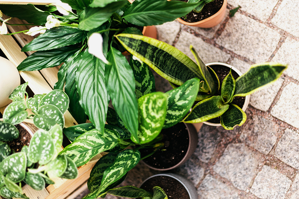 The Ultimate Holiday Gift Guide to Potted Plants feature