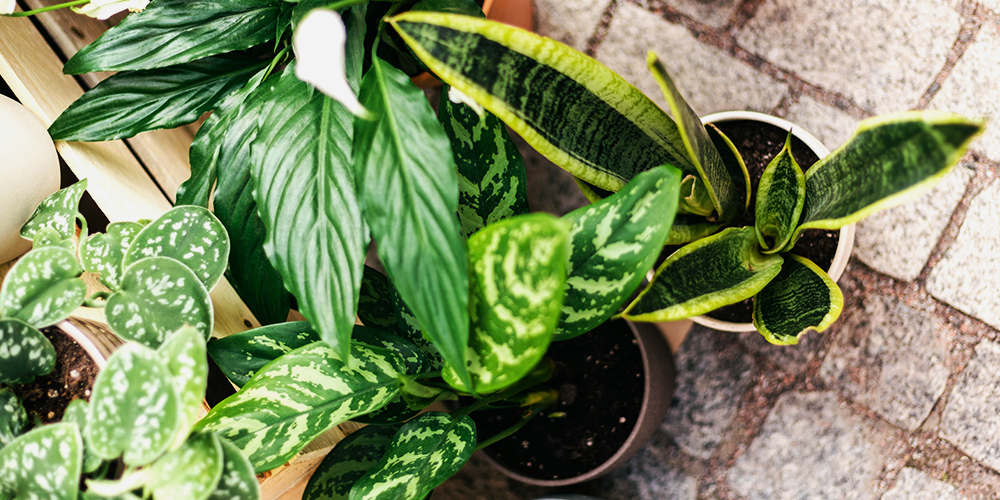 The Ultimate Holiday Gift Guide to Potted Plants main