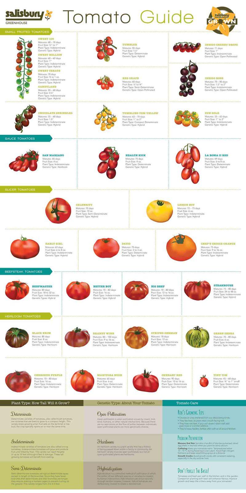 Salisbury Tomato Guide