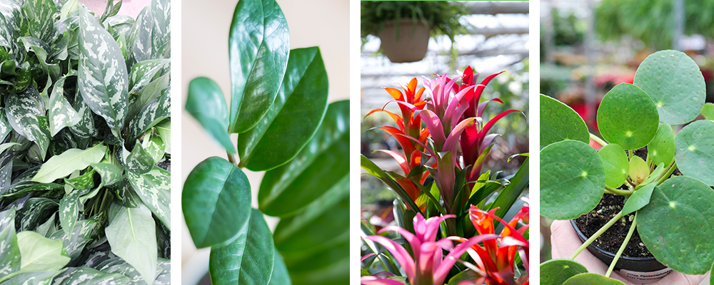 Our Top 10 Favourite Houseplants