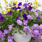 How To Plant A Container Garden