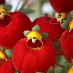 Top 3 New Annuals Of 2016