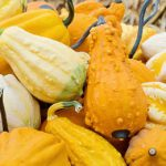Summer vs Winter Squash