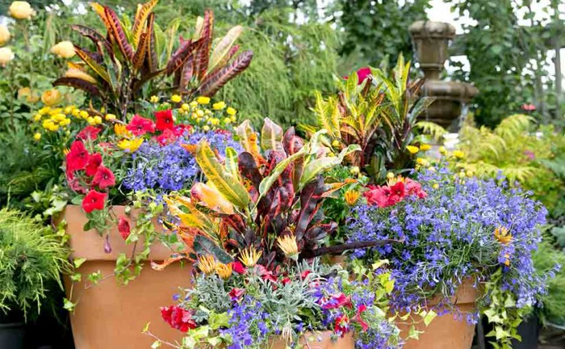 Container Garden University: Basic Elements