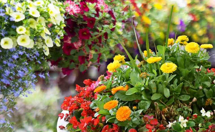 Container Garden University: Compatibility