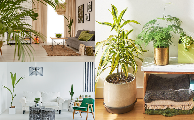 Home Styling with Houseplants