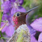 Best Plants for Hummingbirds