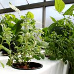 Trends ⅕ – Growing Food Indoors