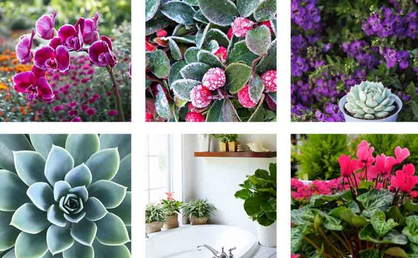 10 Instagrams to Follow If You Love Plants