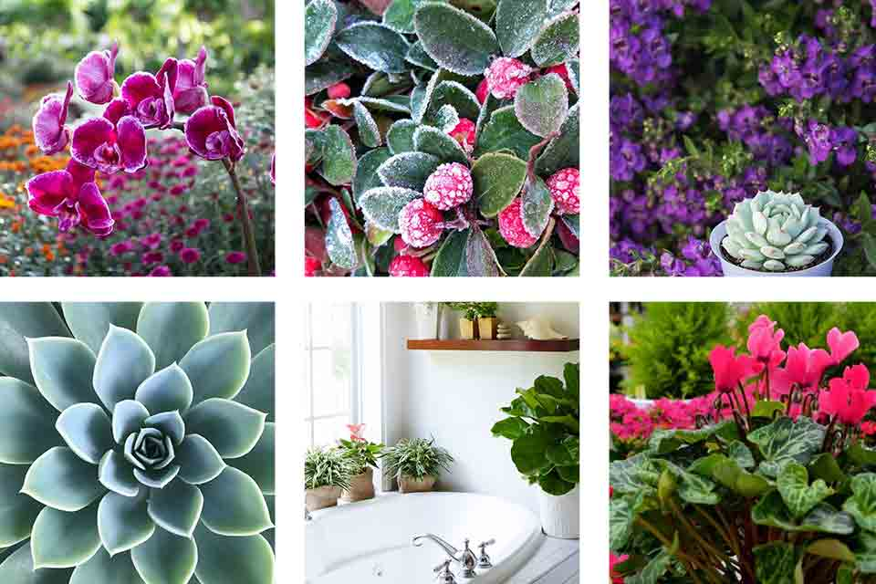 10 instagrams to follow for plant lovers