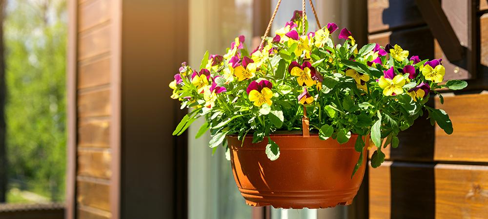 plants for fall puts pansies salisbury greenhouse sherwood park