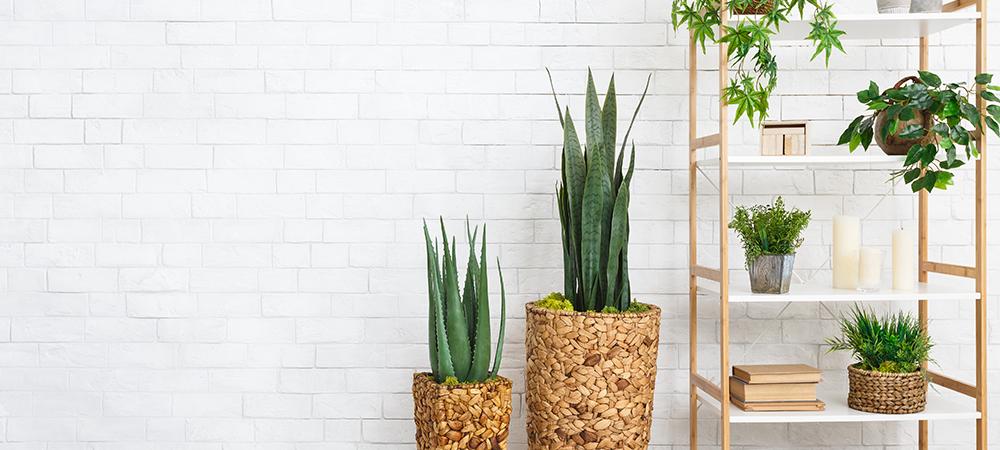 plant styling trends salisbury greenhouse sherwood park edmonton