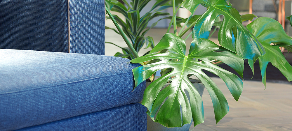 Monstera: How To Care For The Trenst Plant Of 2019 ... on house jobs, house announcements, house buzz, house tutorials, house family, house reference, house posts, house activity, house hunting tips, house spotlight, house history, house construction guide, house pages, house trends, house painting tips, house services, house that talks, house roster, house photography, house desktop wallpaper,