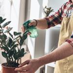 Mastering Plant Parenthood