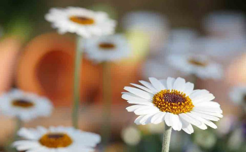 The Social Network in Your Garden