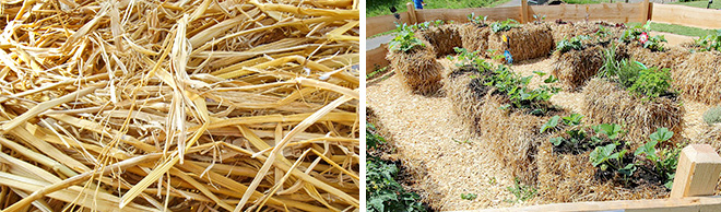 Salisbury Greenhouse Dig In Blog Straw Bale Gardening
