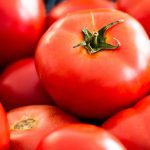 Training Tomatoes: How to Run a Sugar Factory