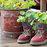 The Top 7 Weirdest Gardening Trends Of 2019