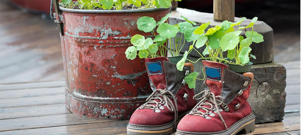 weirdest-gardening-trends-main